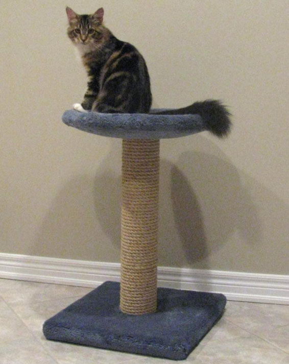 cat trees for sale. Escarpment Pet Retreat Is Pleased To Offer Cat Trees For Sale! Click On Any Photo Enlarge It \u2013 A Details List Can Be Found At The Bottom Of This Page. Sale E